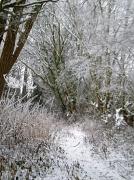 20th Dec 2010 - Snow scene.