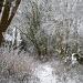 Snow scene. by snowy