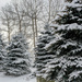 Snow on trees by mittens
