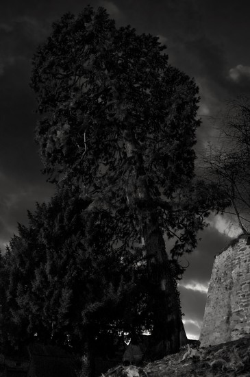 The Leaning Tree by rjb71
