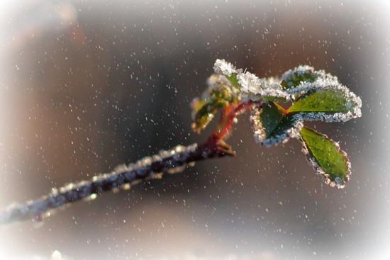 Playing With Old Frost by milaniet