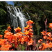 Waterfall and Canna's...