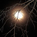 Moon through tree branches by congaree