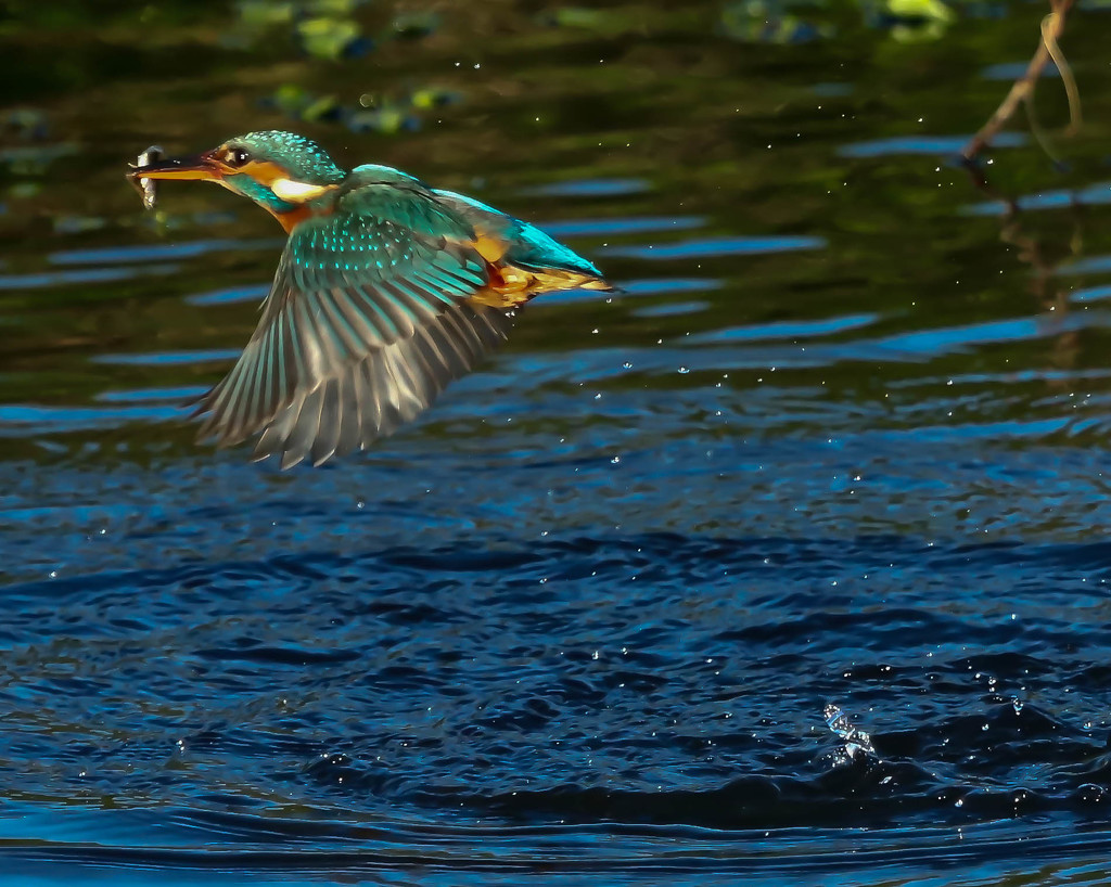 King Fisher Splash Shot by padlock