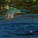 King Fisher Splash Shot by padlock