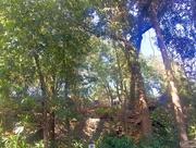 10th Jan 2017 - The woods at Malabar hill
