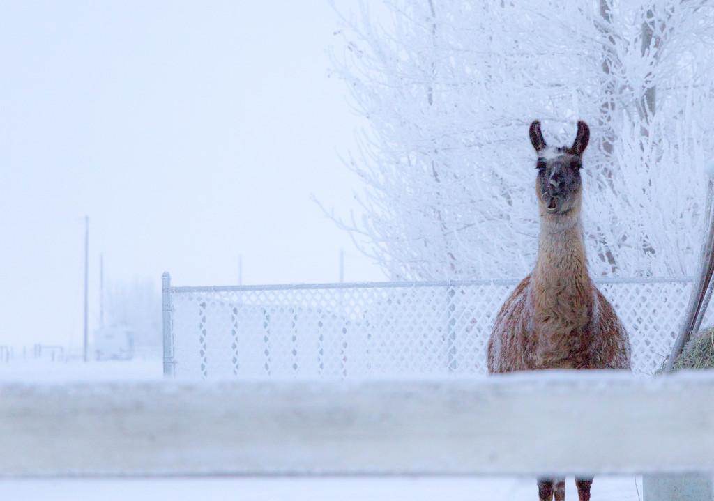 Eating Snow For Breakfast by bokehdot
