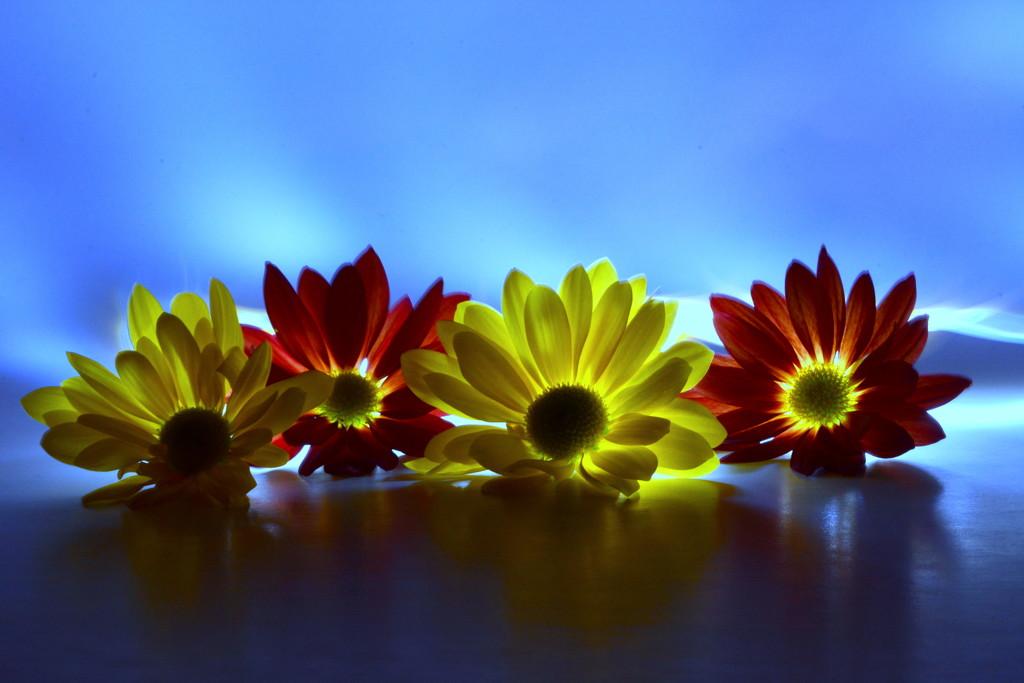 Light Petals by jayberg