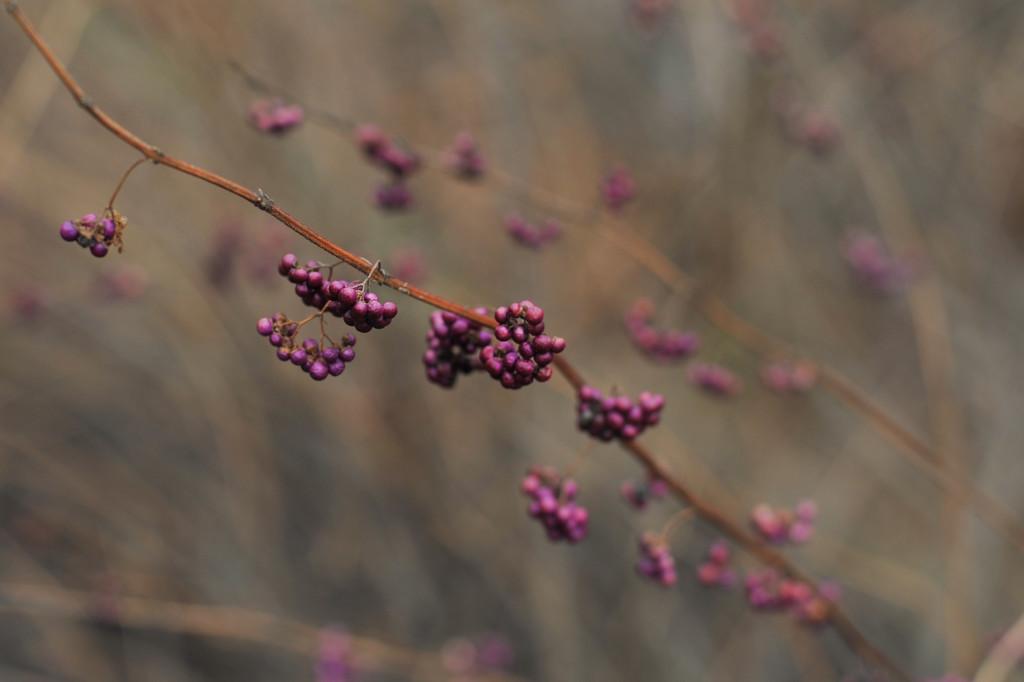 Winter Purple by loweygrace