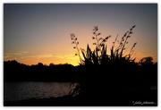13th Jan 2017 - Ngungaru Sunset....