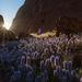 Wildflowers at Kata Tjuta by bella_ss