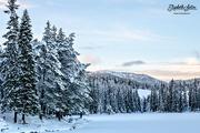 14th Jan 2017 - Winter wonderland