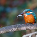 Fish with Kingfisher-yes another bird on a stick by padlock
