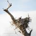 Guarding the Nest