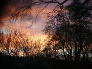 14th Jan 2017 - Evening sky ...