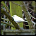 Leucistic Bird