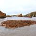 Seaweed Island