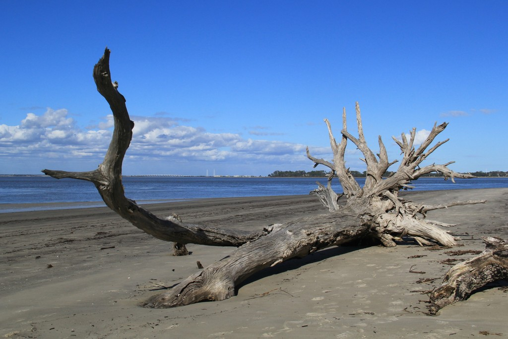 Driftwood  by calm