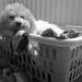 Innocence on Laundry Day