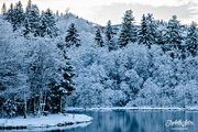16th Jan 2017 - More winter wonderland