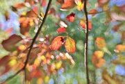 13th Oct 2016 - leaves