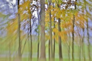 14th Oct 2016 - lensbaby trees