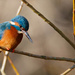 Kingfisher on well lit river bank by padlock