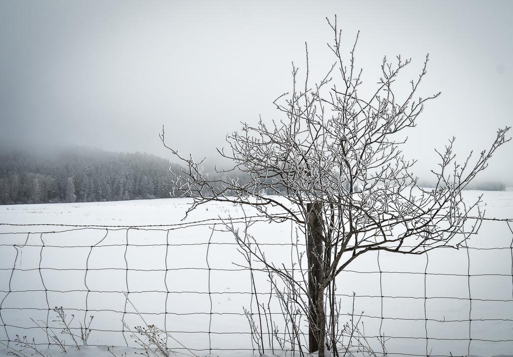 Misty Winter Day  by 365karly1