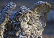 16th Jan 2017 - Angel at Bonaventure Cemetery
