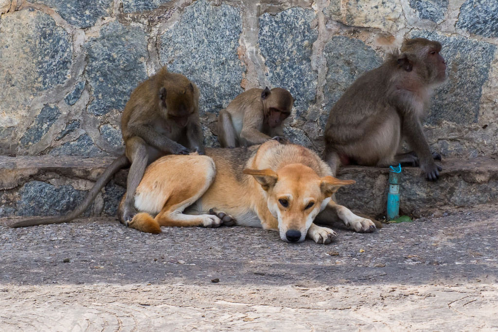 Dogs Are A Primate's Best Friend by fotoblah