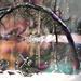 Bent Tree In The Snow by joysfocus