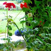 19th Jan 2017 - Flowers in the garden room
