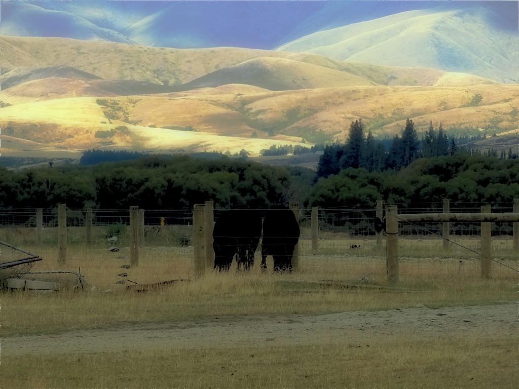 In Them 'Thar Hills.. by maggiemae