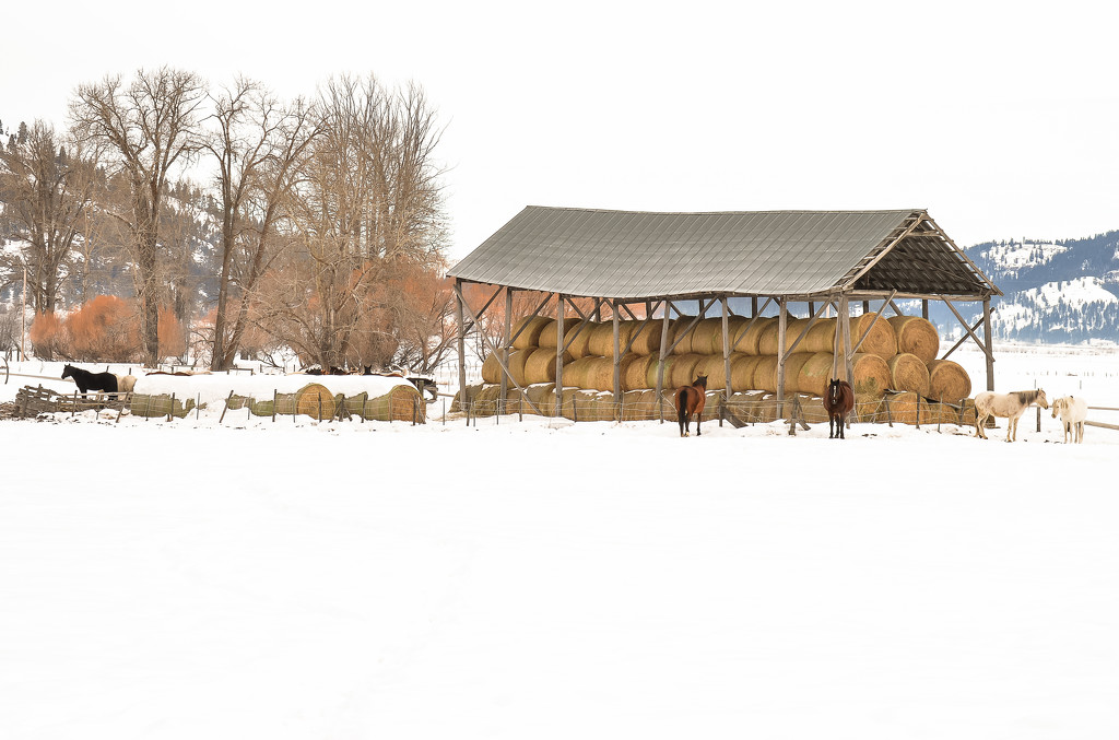 Snowy Day at the Ranch by 365karly1
