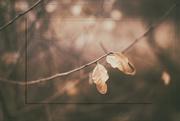 21st Jan 2017 - Just Three Leaves