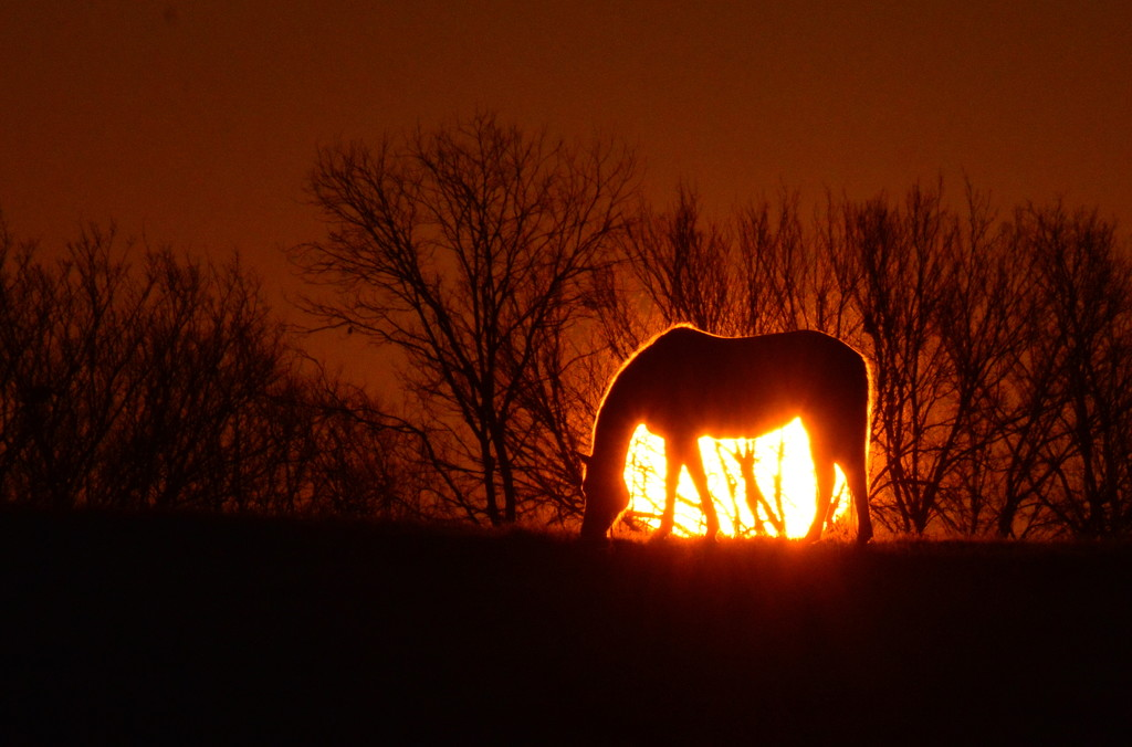 Horse Eclipse by kareenking