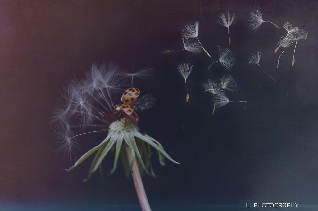 Make A Wish by flashster78
