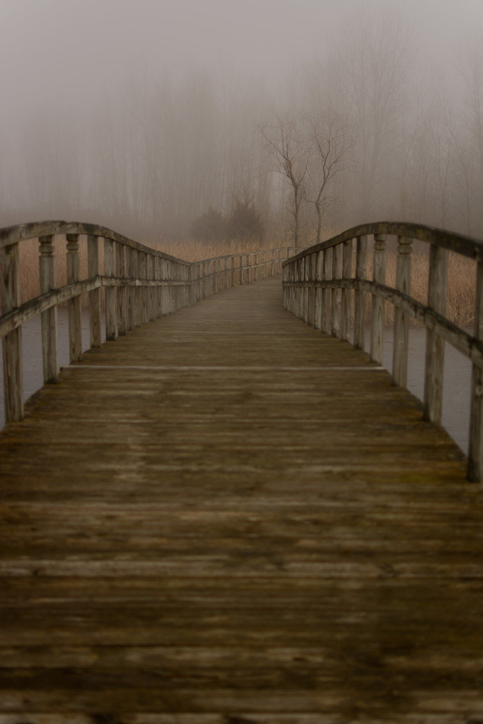 fog for days by jackies365