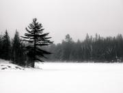 23rd Jan 2017 - winter