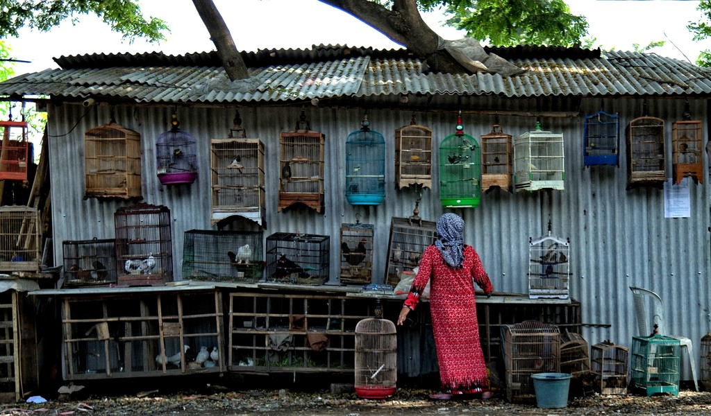 Birds For Sale, Java, Indonesia. by leananiemand
