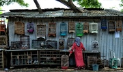 21st Jan 2017 - Birds For Sale, Java, Indonesia.