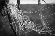 24th Jan 2017 - It's a tangled Web we weave