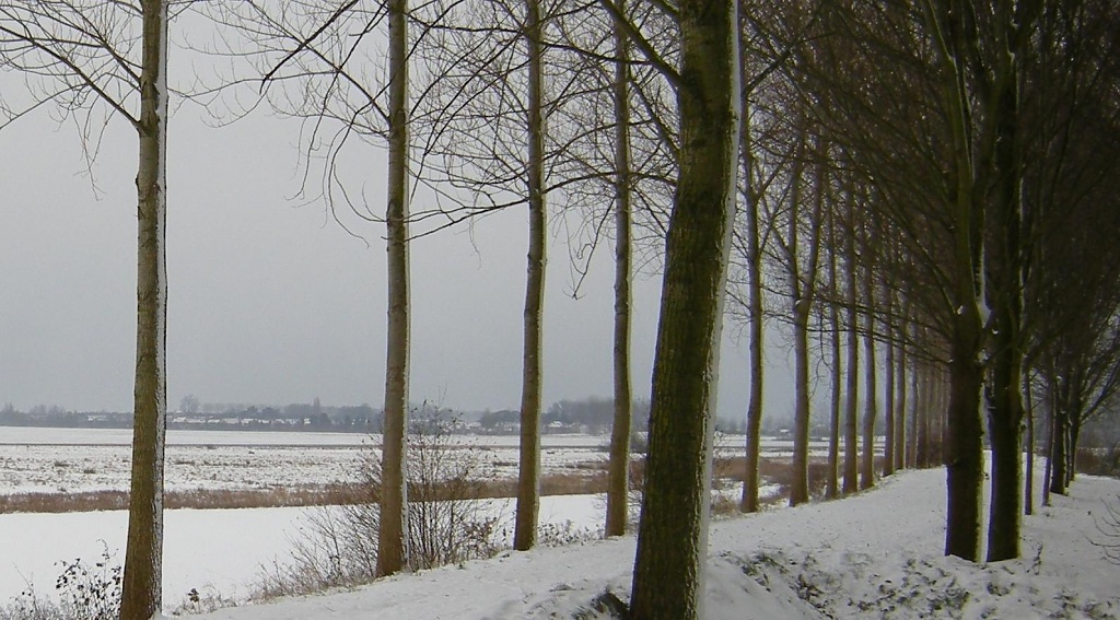 Winter landscape with ditch and dyke by pyrrhula