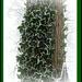 frosty ivy by gijsje
