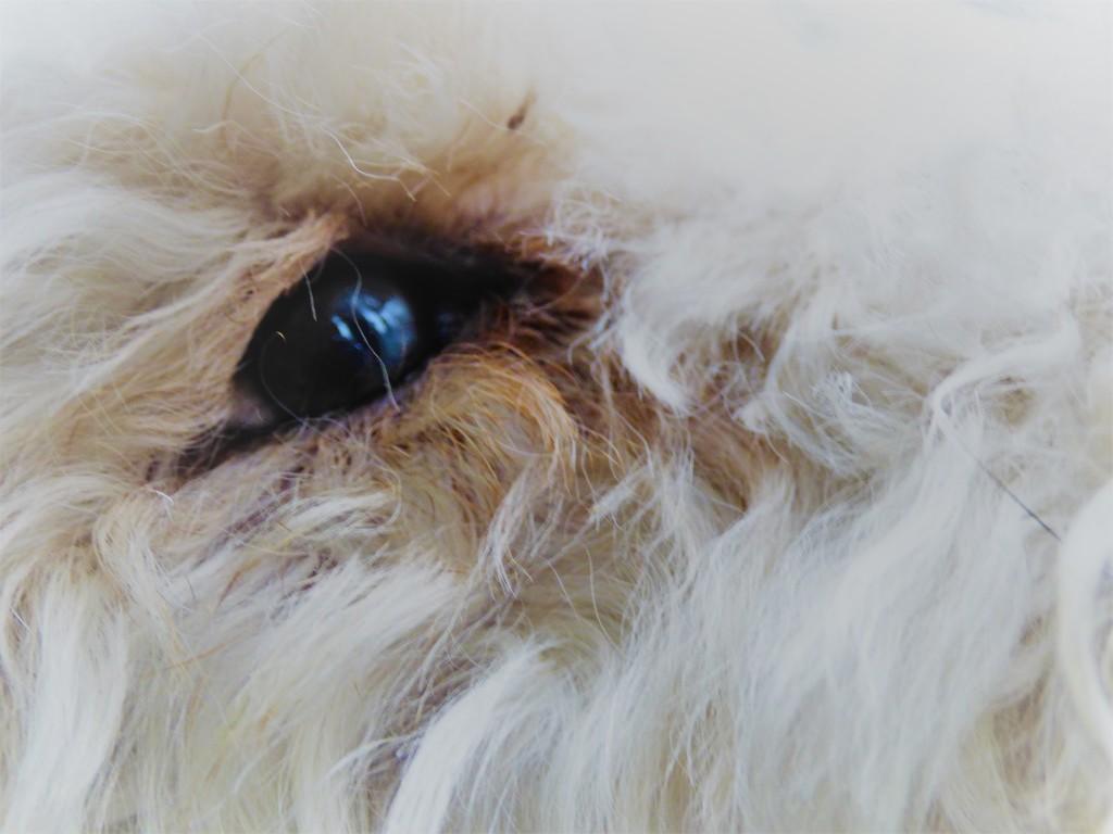 Mum , I've got a hair in my eye ! by beryl