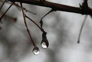 13th Dec 2016 - droplets