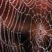 A Lone Spiderweb by milaniet