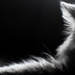 Cat by vera365