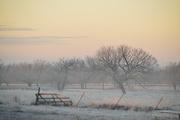 19th Jan 2017 - Kansas Foggy Winter Landscape