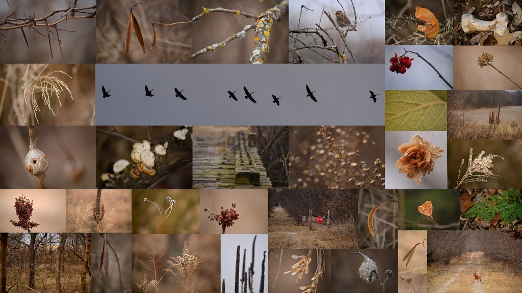 Winter Beauty on the Flint Hills Nature Trail by kareenking